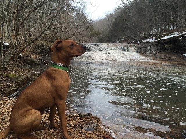 Migliori cani per camminare in montagna