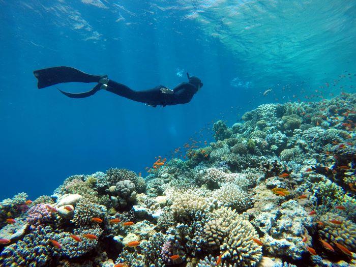 pesca in apnea, qual è la normativa?
